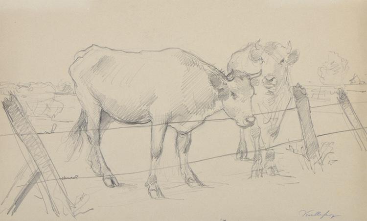 Félix de Vuillefroy, Vaches normandes